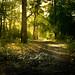 Sutton Park Morning Light