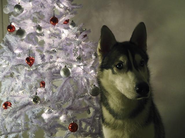 joulubamse