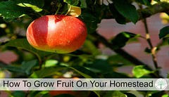 Learn how to grow fruit on your homestead