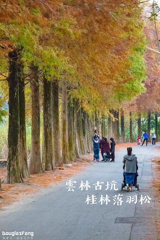 【遊記】雲林古坑桂林落羽松 (1)
