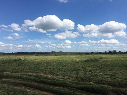 こんな感じの草原