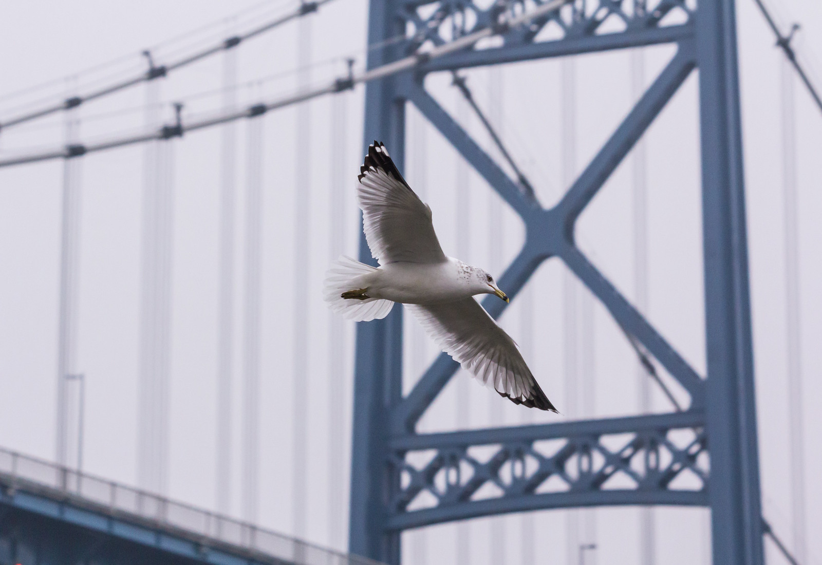 Seagull and Anthony Wayne Bridge
