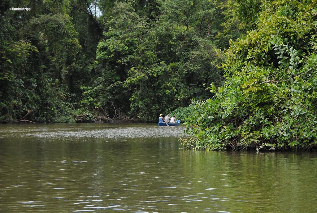 Vene, Tortuguero, Costa Rica