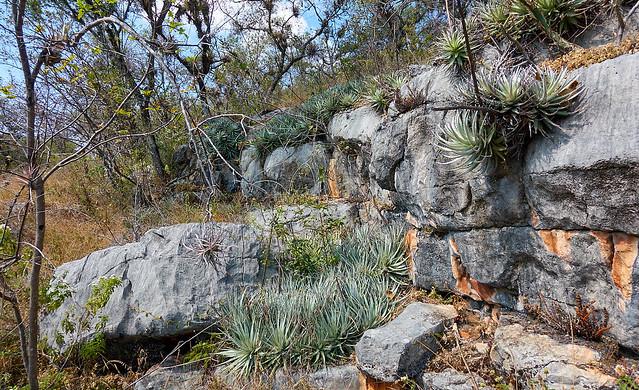 Limestone and bromeliads