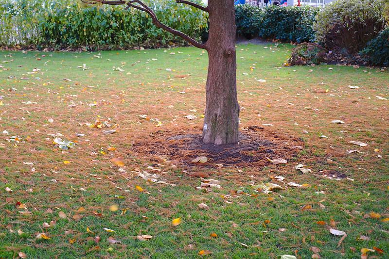 Autumn, Jubilee Park