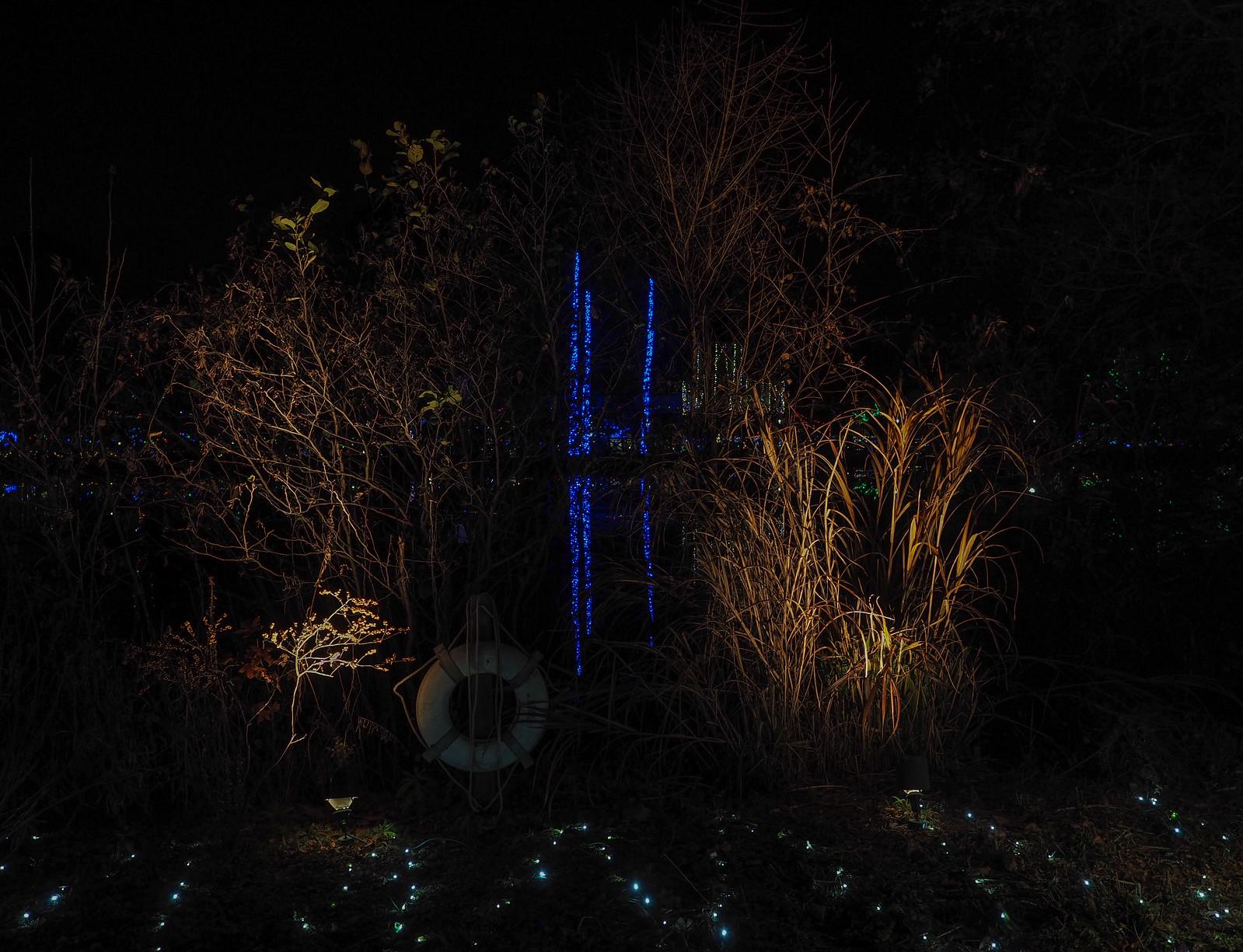 lake w wrapped trees
