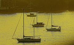 Sail Boats At Harbor