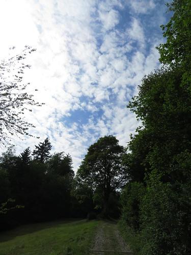 20170614 04 346 Jakobus Wolken Weg Wald
