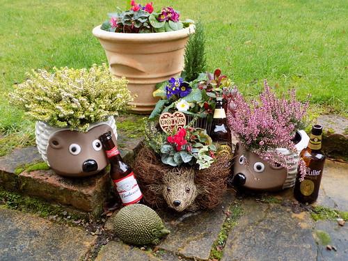 Hedgehog Party 004