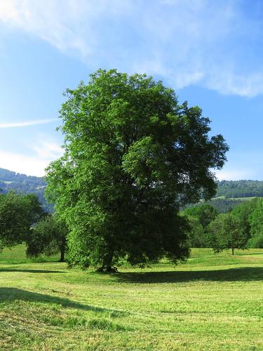 20170614 04 431 Jakobus Hügel Wald Wiese Baum