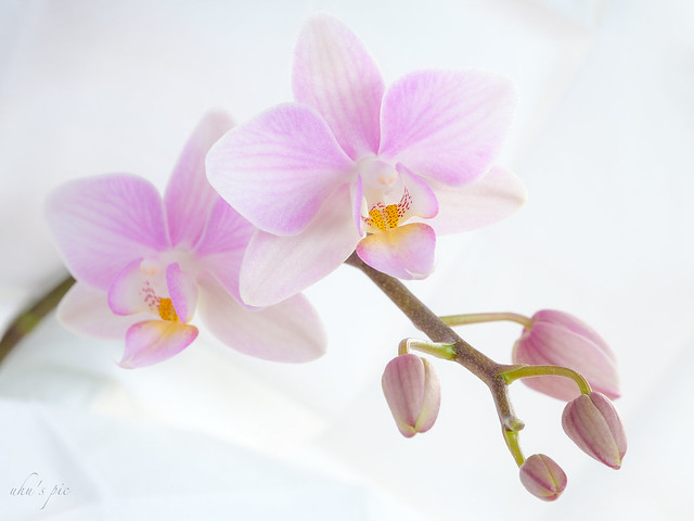 Orchidee (zum 2ten) - und schöne Weihnachten euch allen