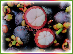 Recently harvested edible fruits of Garcinia mangostana (Mangosteen, Purple Mangosteen, Manggis in Malay), 14 Dec 2017