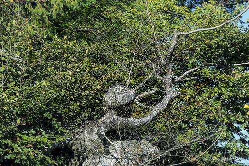 Un fantôme dans les arbres_5580