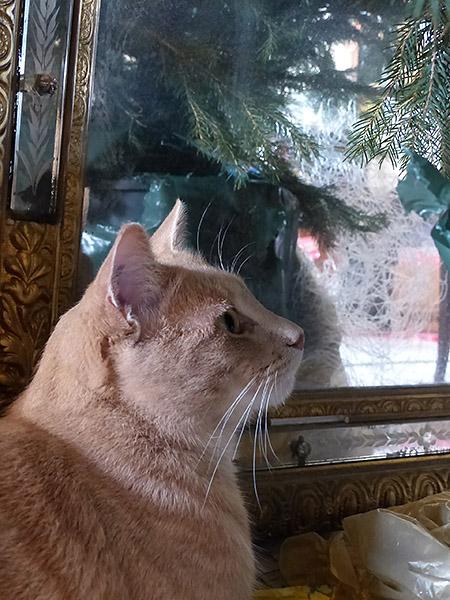 Bounty aime Noël