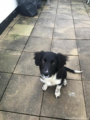 Tue, Jan 2nd, 2018 Found Male Dog - Dun Eibhir, Furbogh, Galway