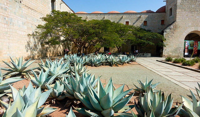 Agave and poinciana