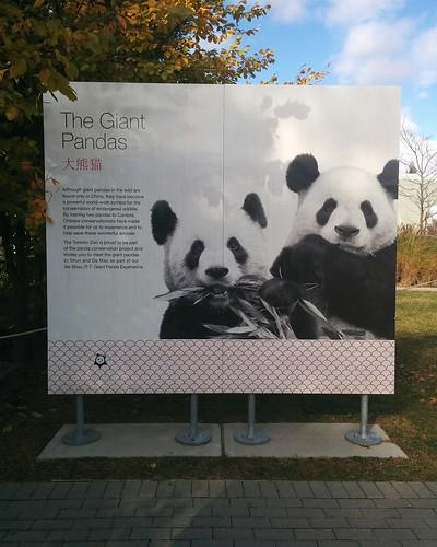 The Giant Pandas #toronto #torontozoo #pandas #giantpandaexperience #sign #chineselanguage #latergram