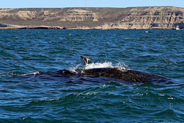 Whale Surfing, Canon EOS 6D, Canon EF 24-85mm f/3.5-4.5 USM