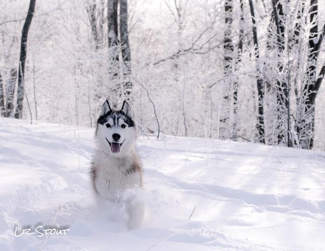 20180102 Snowdogs_253
