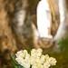 préparation de l'hommage florale