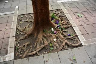 Contained tree (Taipei, Taiwan 2017)