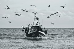 When the seagulls follow the trawler ...