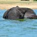 Giochi di elefante