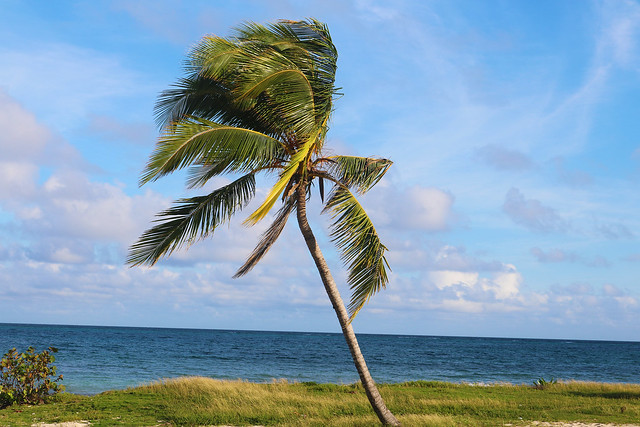 Palm tree in the sea breeze
