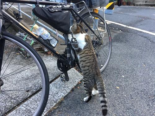 自転車に戻ってくるとネコがいた(6)