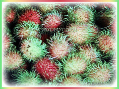 Colourful fruits of Nephelium lappaceum (Rambutan, Hairy Lychee) that can be round or oval-shaped, 11 Dec 2017