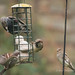 3's Company - Bird Feeder (15)
