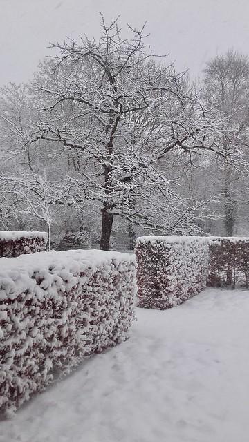 Besneeuwde tuin