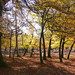 New Forest NP, Hampshire, England