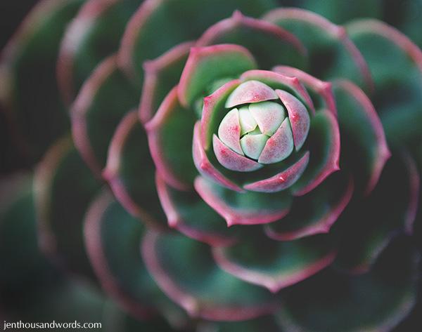 Succulent 02