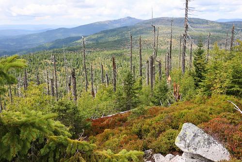 Bavorský les - Lusen ze Sankt Oswaldu