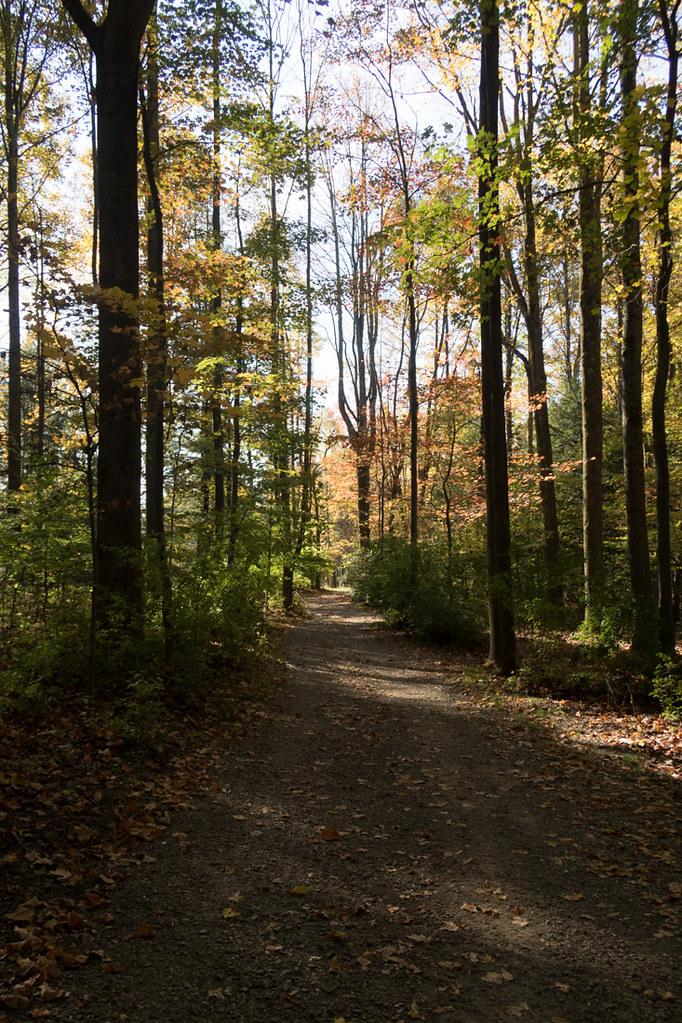 Wooded path at Kentuck Knob