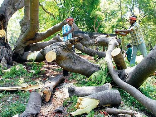 जंगलों में अवैध तरीके से अन्धाधुन्ध कटाई हो रही है