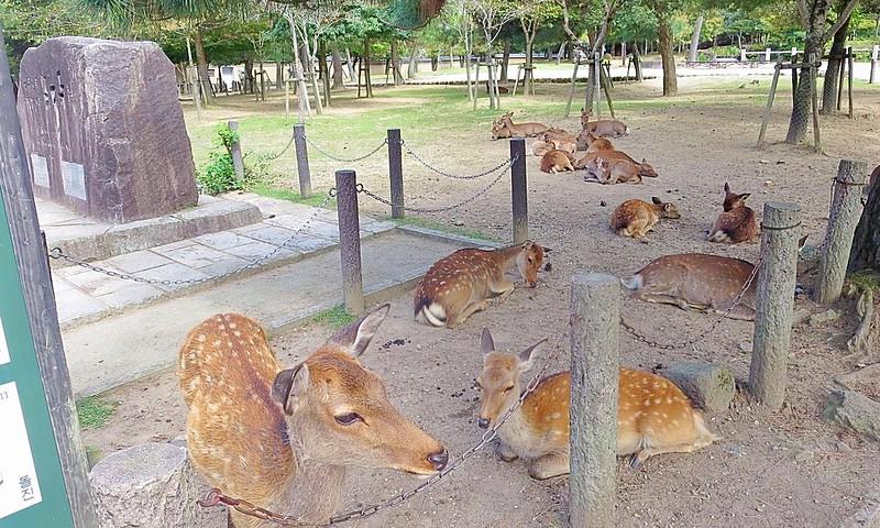 Nara Perfecture Kansai Region Japan