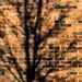 Tree Shadows, Kibworth, Leicestershire (2/365:2018)