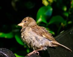 Sparrow LBJ