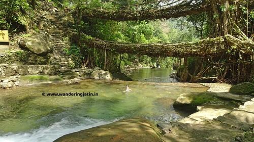 Swimming at Double Decker living root bridge