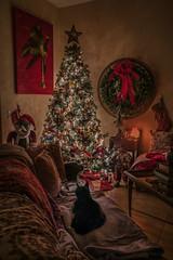 Kona and the Christmas Tree