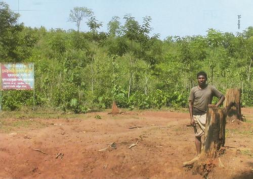 ओडिशा के पिडिकिया गाँव में वन अधिकारियों ने फरवरी में वनाधिकार के तहत आने वाली 300 हेक्टेयर सामुदायिक भूमि पर 60,000 टीक के पौधे रोप दिए