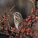 Among the Berries ! by spicysquid1