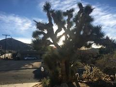 12 Joshua T Sunlight through Cactus