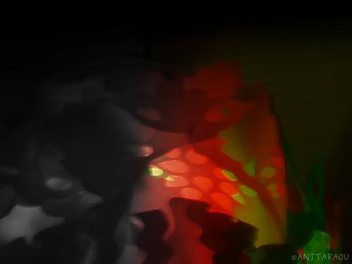 Color and Light | Anita Rao