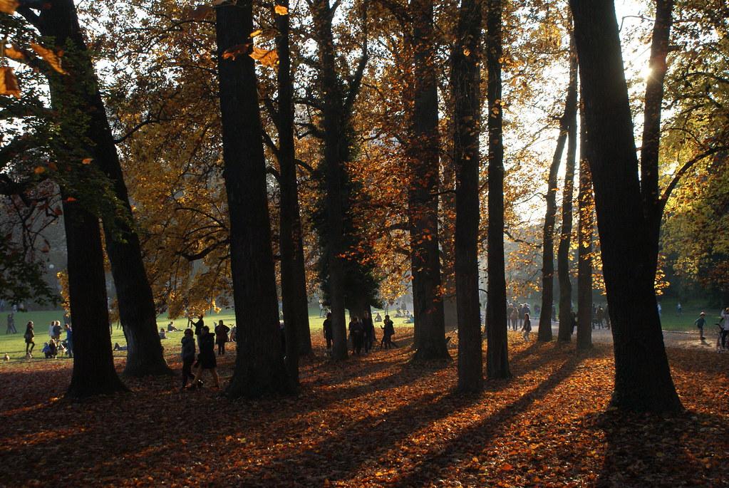 Bosquet du parc de la Tête d'or à Lyon en automne.