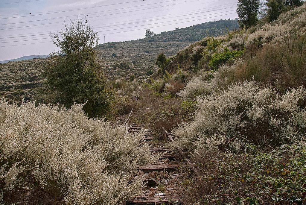 2012 - Linha Sabor (Pocinho-Moncorvo) 124