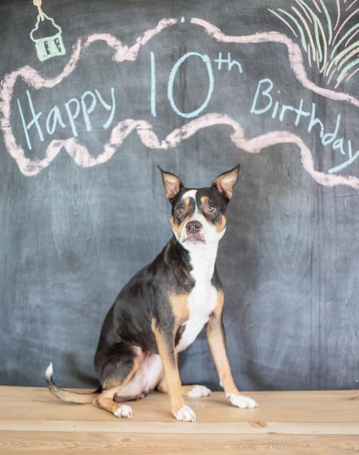Koira's 10th Birthday-7103