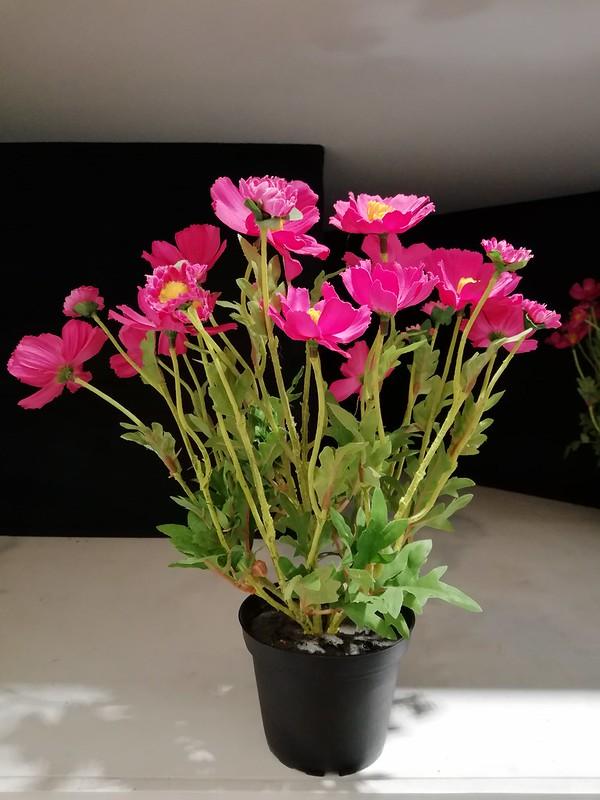 Flower pot closeup with Mate 10 Lite